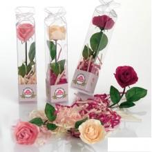 Rosa de jabón modelo 3
